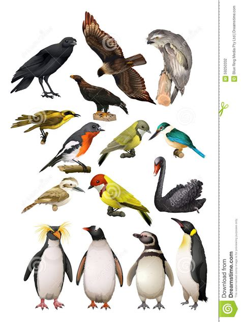 Different Kind Of Birds Stock Vector Image: 59250332