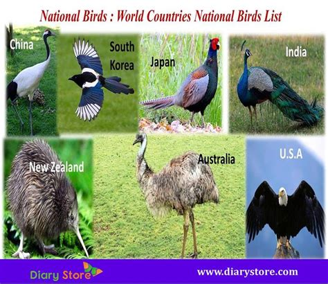 National Birds Worlds All Countries Birds Animals