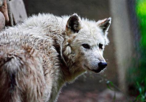 Wild Animal Wallpapers, Desktop Images, Free Wallpapers