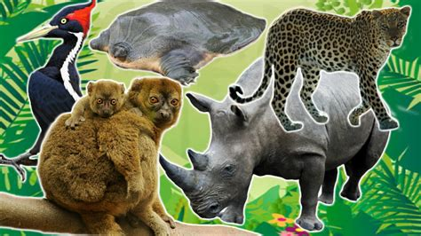 endangered species Uzoo Animals