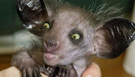 Ugliest Baby Animals wwwimgkidcom The Image Kid Has It!