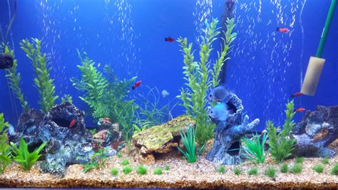 Fish Tank Wallpaper WallpaperSafari