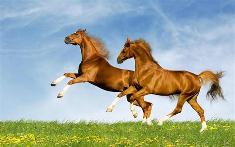 Horses HD Wallpapers Horse Desktop Wallpapers 1080p HD