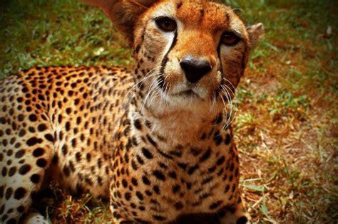 Beautiful Animal Pictures Animals
