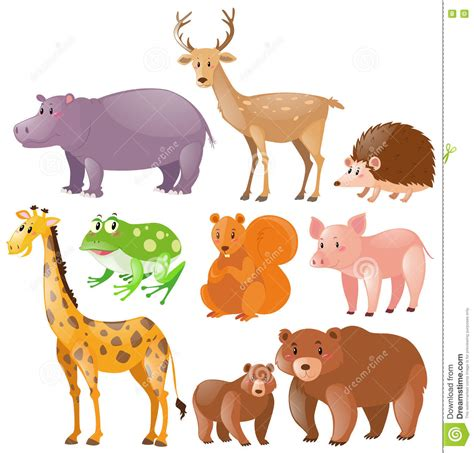 Different Kinds Of Wild Animals Stock Illustration Image