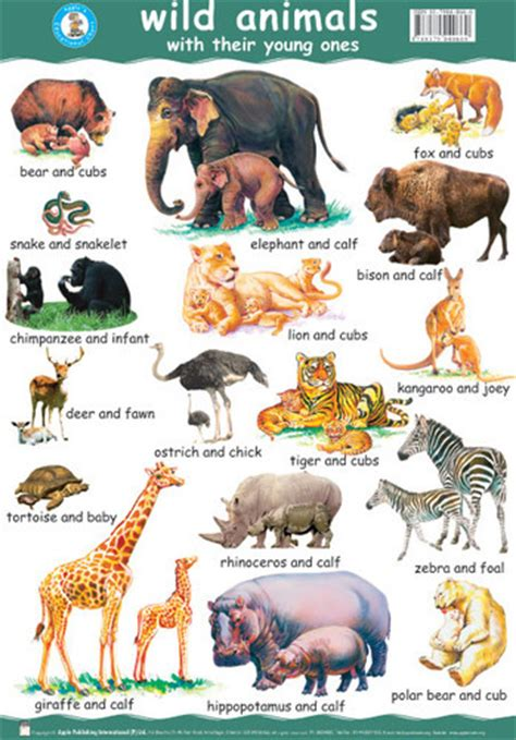 Wild Animals Pictures With Names And Information