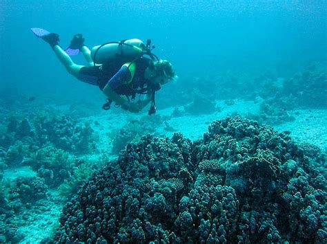 Red Sea Diving Photo, Diving in Red Sea