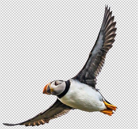 Bird macareu #1