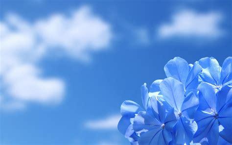 Blue Wallpaper For Desktop Top Backgrounds & Wallpapers