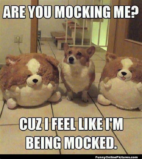 really funny animal memes