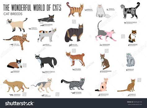 Vector Breed Cats Icons Set Cute Stock Vector 507626143 Shutterstock