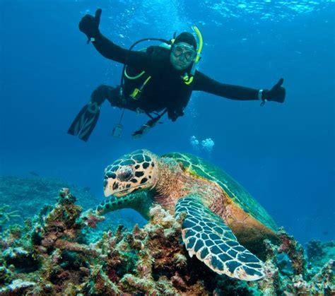 17 Best images about Scuba Diving on Pinterest Cozumel