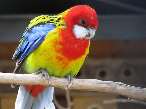 10 Most Colourful Birds in the World PetHelpful