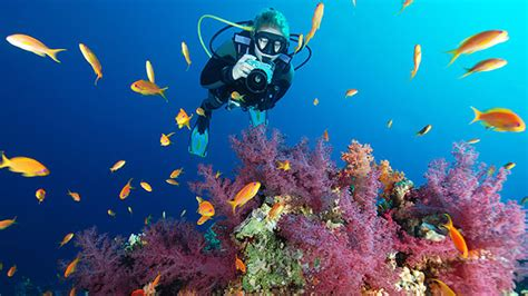 PADI Digital Underwater Photography Specialty course in