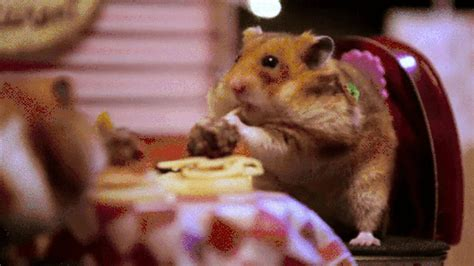 Valentines Day Eating GIF Find & Share on GIPHY