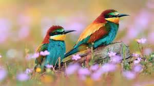 Home > HD Wallpapers > Birds > Kingfisher Birds Latest HD Images