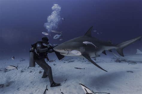 Bull Shark Scuba Diving MyDeepLifeCom