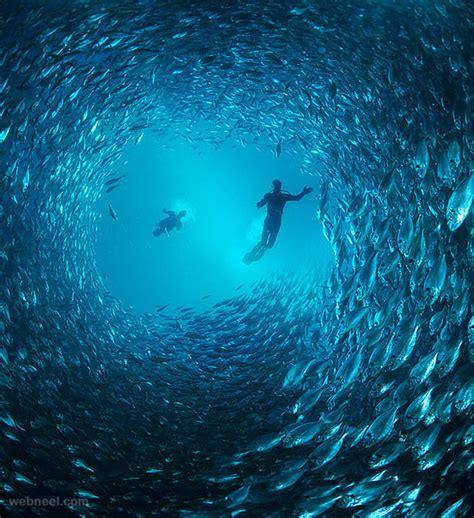 25 Incredible Award Winning Underwater Photography