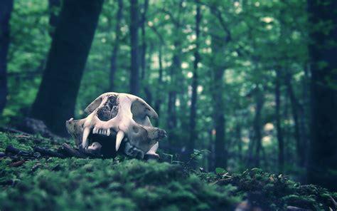 Dark skull fangs trees forest wallpaper 1920x1200