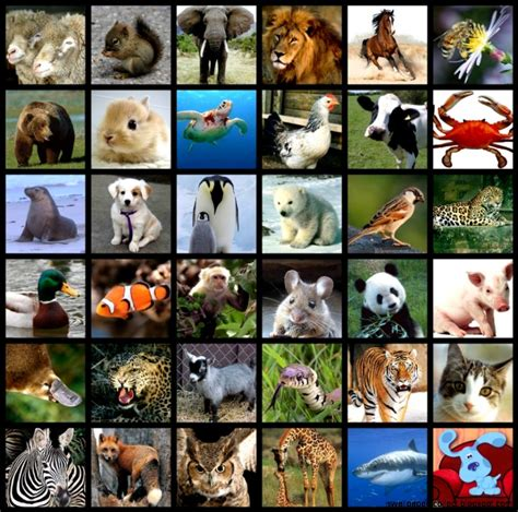 All Types Of Animals Wallpapers Collection