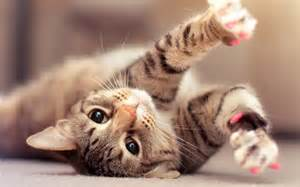 Cat Cute and Lovely Animal Facts Animals Lover