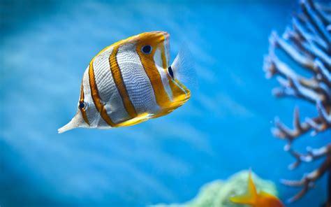 Beautiful Fish Wallpapers HD Pictures One HD Wallpaper Pictures Backgrounds FREE Download