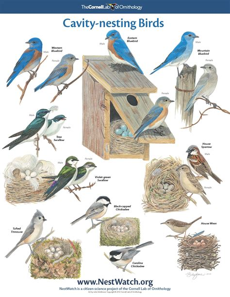 Pictures Of Different Types Of Birds And Their Names