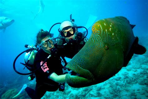 Scuba Diving Port Victoria Jetty Yorke Peninsula South