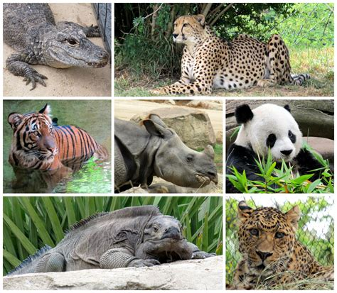 Life with Dylan: Endangered Species Monday What is the IUCN?