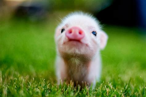 Cute Baby Animal Wallpaper Pictures to Pin on Pinterest