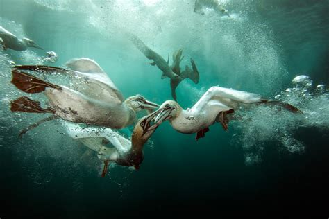 In Pictures: Underwater Photographer of the Year 2015