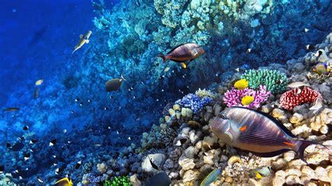 Ocean Seabed Reef Exotic Marine Fish Desktop Wallpaper Backgrounds Hd : Wallpapers13com