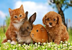 Pets Animals Wallpaper (38745689) Fanpop