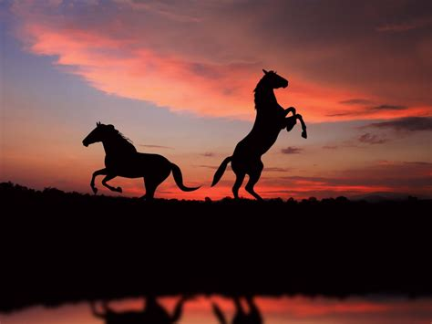 Horse Wallpapers HD Pictures One HD Wallpaper Pictures