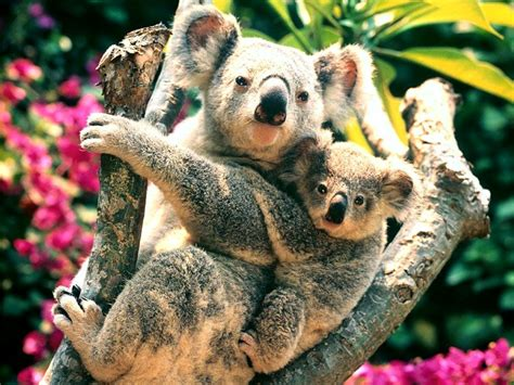 ANIMALS PLANET: Most beautiful animal pictures