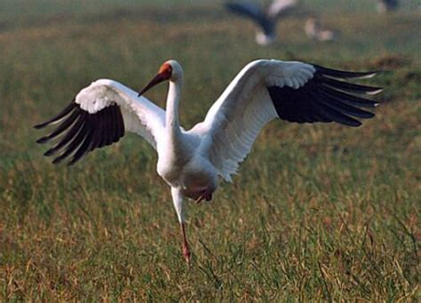 Top 10 Different Types Of Cranes Birds In The World