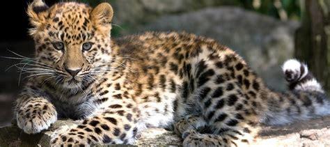 Endangered Species Statistics Statistic Brain