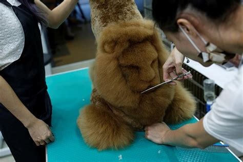 Designs shaved on cats and dogs Grooming gone too far