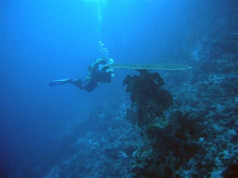 Top 5 Dive Sites In Egypt DeeperBluecom
