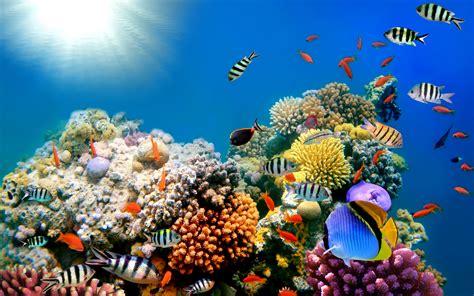 fish wallpapers for desktop HD Desktop Wallpapers 4k HD