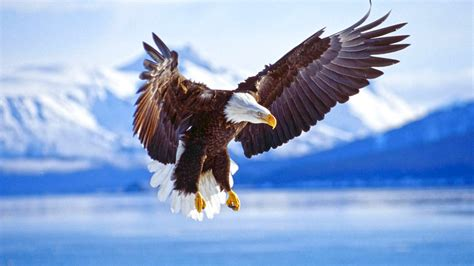 Flying eagle bird HD wallpaper New hd wallpaperNew hd