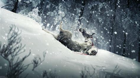 Animals in Snow Wallpaper WallpaperSafari