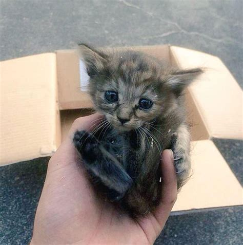 Komari, le chaton qui se prend pour un furet Insolite