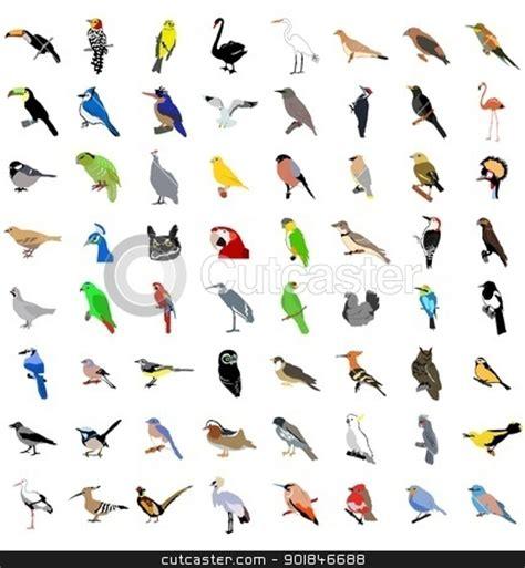 Best 28 Various Species Of Birds types of birds