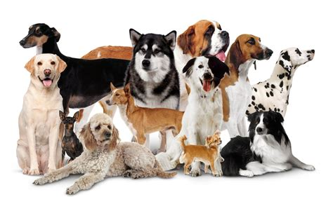 Domestic Dogs Different Types of Dogs DK Find Out