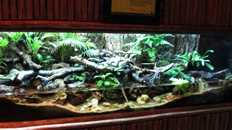 Common Greenback vivarium, Fragile Forest exhibit