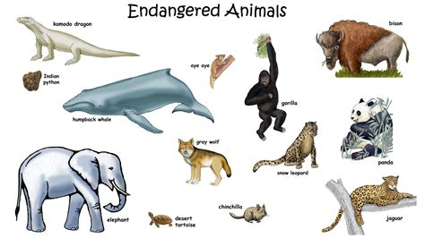 Animals That Are Endangered List Bing images