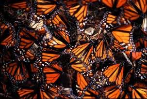 The Monarch Butterfly Sanctuary Foundation
