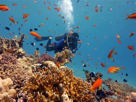 Red Sea Diving Advanced Open Water Diver — Red Sea Diving