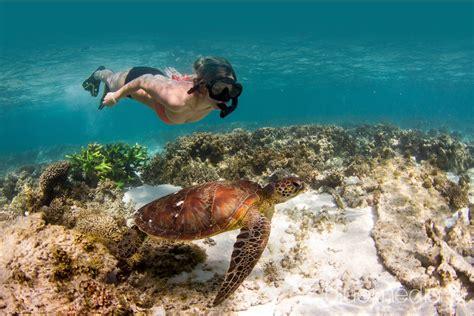 Ningaloo Reef Snorkel Adventure Australia Dive